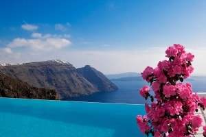 A pink flower by San Antonio Hotel infinity pool, with Santorini caldera & the sea in the background